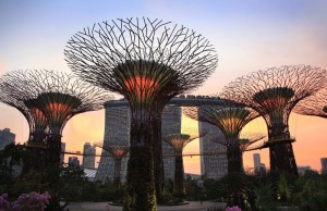 « ابردرخت » در سنگاپور