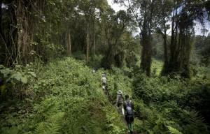 پارک ملی آتشفشان ها در روآندا